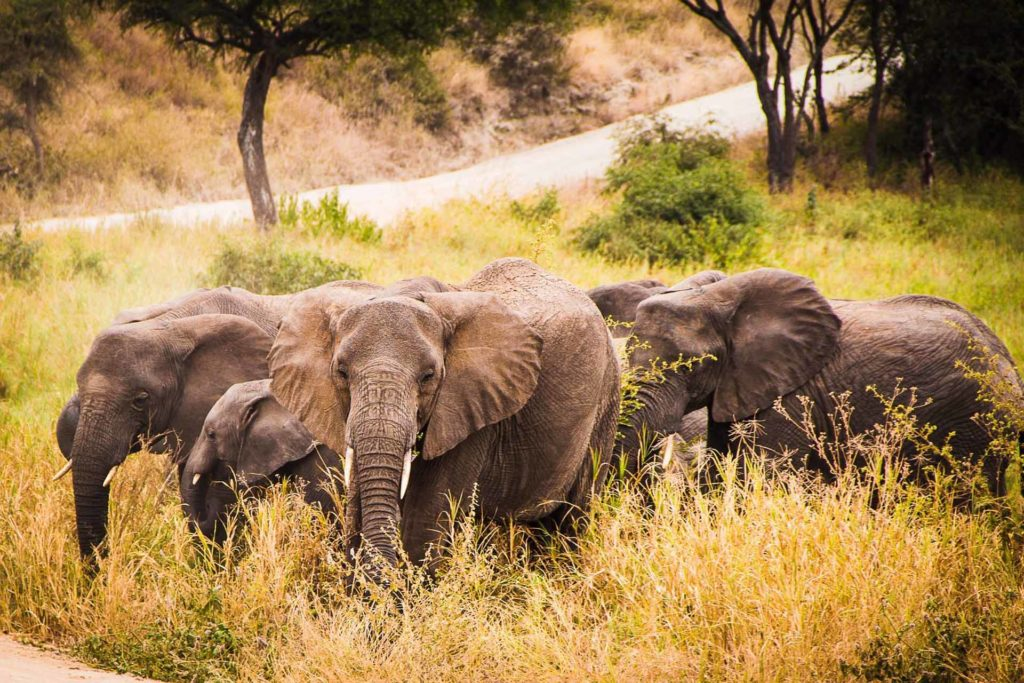 2 DAYS AFRICAN SAFARI ADVENTURE TOUR